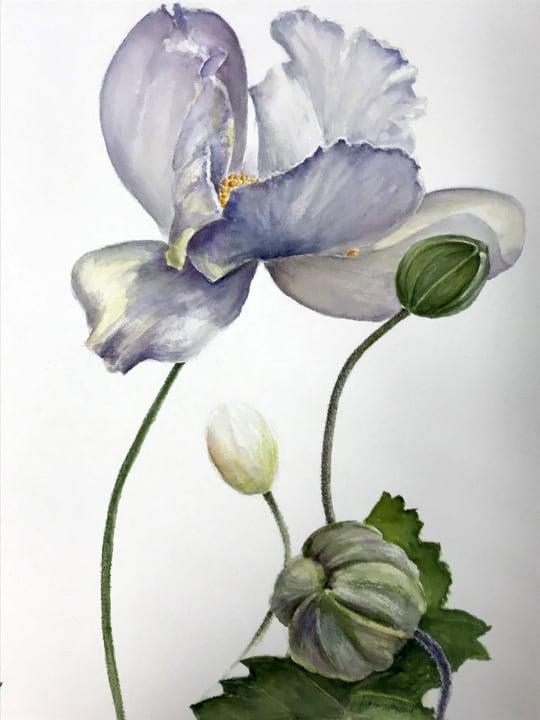 Anemones-Karen Spaulding