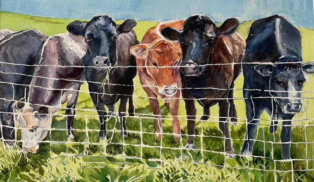 Herd of Cows-Connie De Bordenvave
